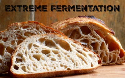 Extreme Fermentation Sourdough